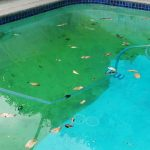 dirty swimming pool before clean-up