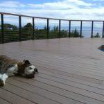 george-on-the-pool-deck