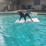 surf-dog-swimming-pool